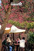 九族櫻花祭:IMG_3287.JPG