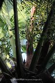 阿爸的後花園:IMG_0013.JPG