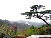 日本賞櫻之旅2010:日本賞櫻之旅 461.jpg
