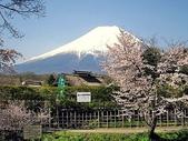 日本賞櫻之旅2010:日本賞櫻之旅2 1189(001).jpg
