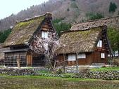 日本賞櫻之旅2010:日本賞櫻之旅2 623