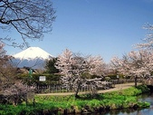 日本賞櫻之旅2010:日本賞櫻之旅2 1191(001).jpg