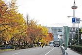 97.11.22日本關西賞楓:DSC_0018道路.jpg