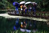 福山植物園的溼意:IMG_9793.JPG