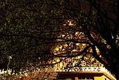 淡水天元宮夜拍:IMG_0719.JPG