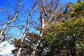 山毛櫸步道大會師:IMG_4976.JPG