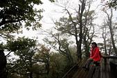 臺灣山毛櫸步道(一):IMG_3629.JPG