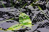 福山植物園的溼意:IMG_9806.JPG