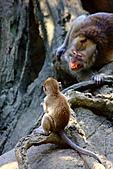 木柵動物園外拍:IMG_3223.JPG