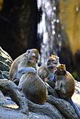 木柵動物園外拍:IMG_3227.JPG