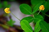 南湖大山影像分享:IMG_4770.JPG