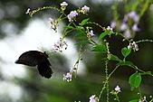 南湖大山影像分享:IMG_4788.JPG