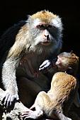 木柵動物園外拍:IMG_3242.JPG