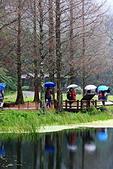 福山植物園的溼意:IMG_9864.JPG