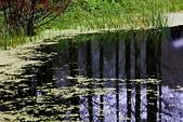 福山植物園的溼意:IMG_9866.JPG