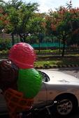 東豐路台灣灤樹:IMG_6913.JPG