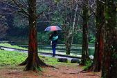 福山植物園的溼意:IMG_9867.JPG