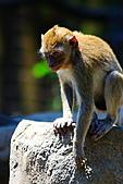 木柵動物園外拍:IMG_3244.JPG