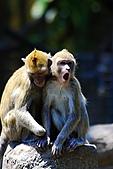 木柵動物園外拍:IMG_3246.JPG