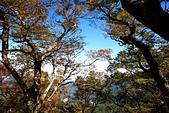 山毛櫸步道大會師:IMG_4983.JPG