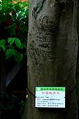 99年加羅林魚木:IMG_3121.JPG
