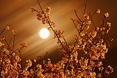 淡水天元宮夜拍:IMG_0740.JPG