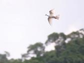 林肯這個『鳥』地方:IMG_5706