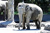 木柵動物園外拍:IMG_3287.JPG