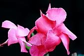 南湖大山影像分享:IMG_4817.JPG