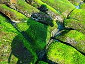 石門老梅。綠石槽:DSC00298.JPG