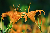 南湖大山影像分享:IMG_4819.JPG