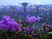 新加坡隨手拍拍:DSC01016.JPG