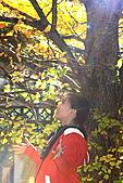 武陵農場銀杏鮮黃:IMG_7429.JPG