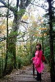 臺灣山毛櫸步道(二):DSC06356.JPG