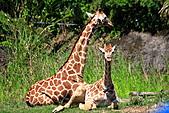 木柵動物園外拍:IMG_3315.JPG