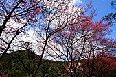 大尖山賞櫻:IMG_0673.JPG