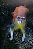 木柵動物園外拍:IMG_3361.JPG