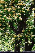 加羅林魚木下悠閒的珠頸斑鳩:CRW_2722.JPG