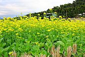 富里油菜花:IMG_7133.JPG