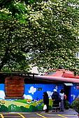 99年加羅林魚木:IMG_3156.JPG