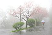 大尖山賞櫻:IMG_0580.JPG