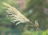 林肯這個『鳥』地方:IMG_6051