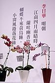 2011台北國際蘭展:IMG_2830.JPG