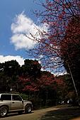大尖山賞櫻:IMG_0677.JPG
