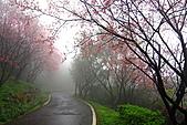 大尖山賞櫻:IMG_0586.JPG