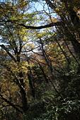 山毛櫸步道大會師:IMG_4948.JPG