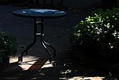 士林官邸玫瑰:IMG_2080.JPG