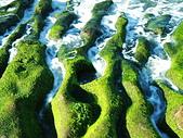 石門老梅。綠石槽:DSC00374.JPG