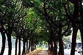 成大榕園:IMG_0462.JPG