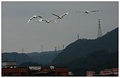 金山丹頂鶴:IMG_2059.jpg